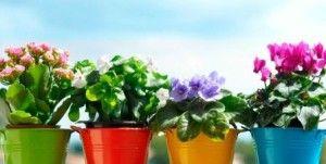 10 Najboljih gnojivo za sobne biljke