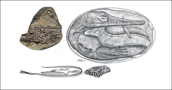Urugvajski naći Mesosaur embrija (slika autora).