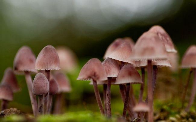 Загадки мира грибов