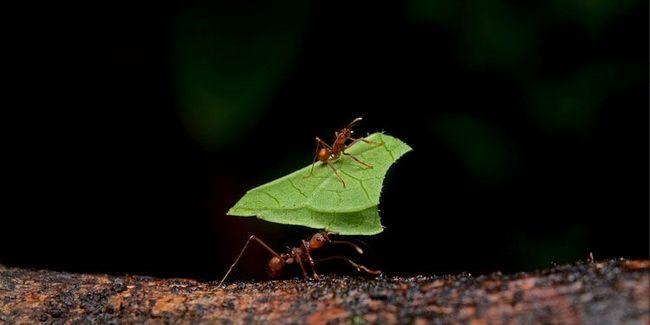 Mravi.