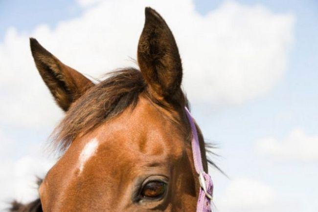 10 Животных c необычными способностями