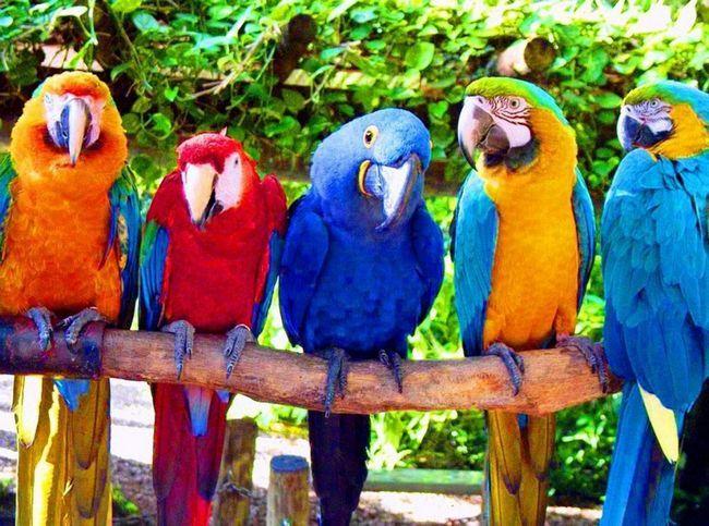 A dokaz za papagaje.