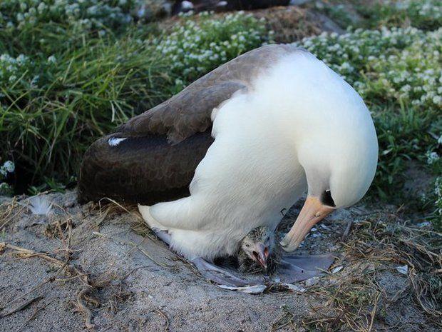 14 životinja u oldtajmera i jedan besmrtni bića