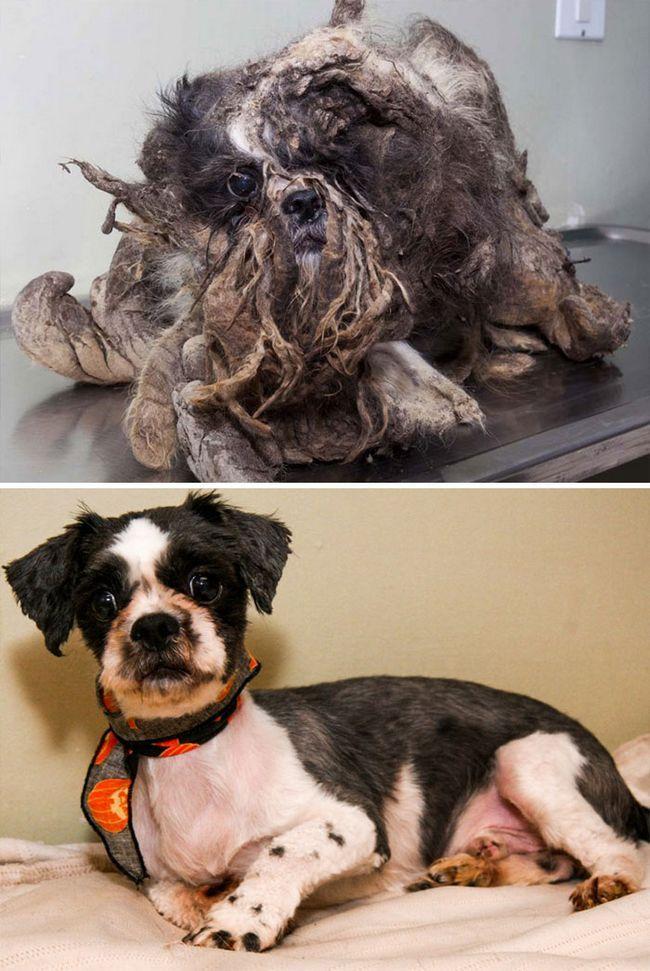 16 toulavých psů před a po záchraně