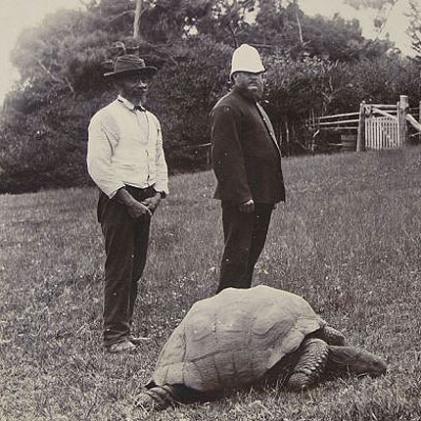 178-godišnja kornjača po imenu Jonathan - najstarija na svijetu
