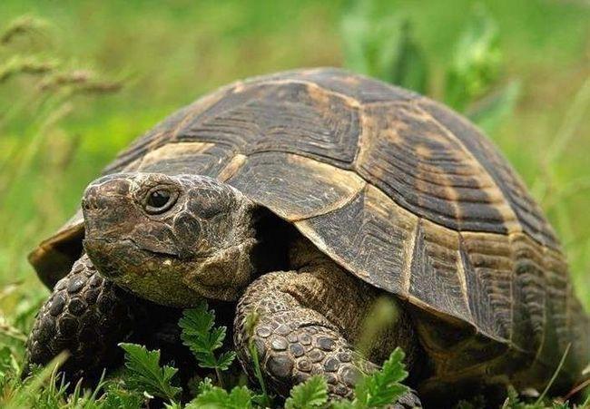 Danas, 23. maj se službeno smatra odmor za kornjače.