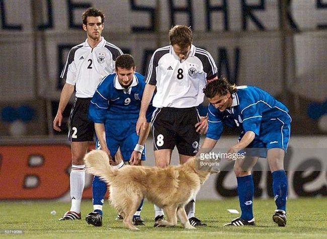 Животные на спортивном поле