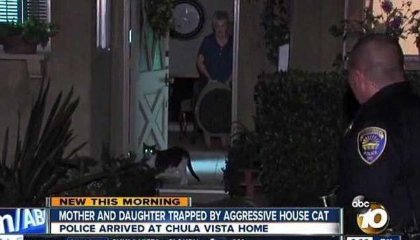 Agresivní kočka vzal jako rukojmí dvě ženy