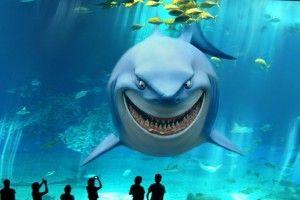 Акула аквариумная: вопросы выбора