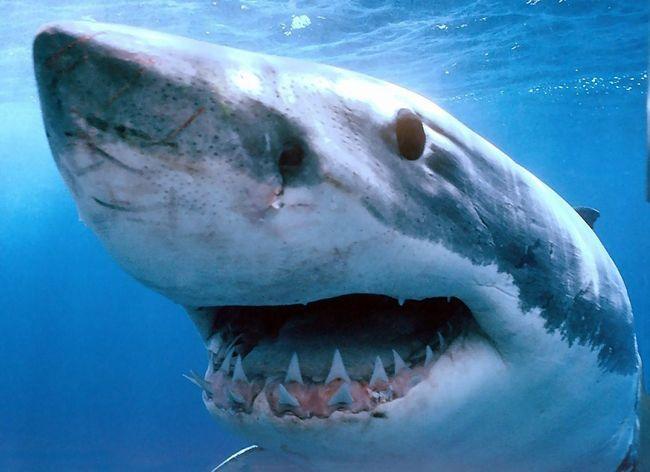 Акула напала на подростка-серфингиста.