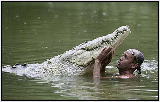 krokodýl Pocho