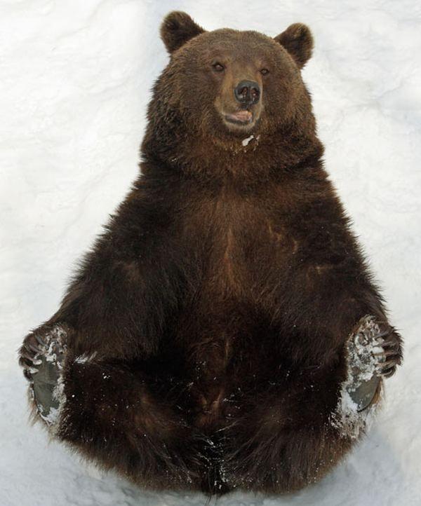 В студенческом городке спасатели сняли медведя с дерева