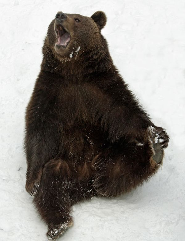 Zimske radosti bavarski medvjeda