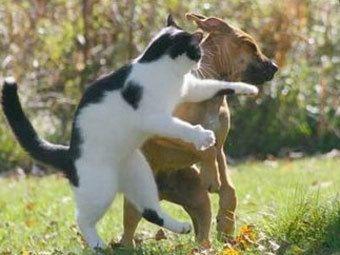 agresivna mačka