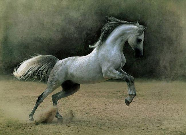 Ovi konji - konstanta učesnicima trke.