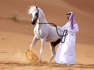 Arabian rasa konja