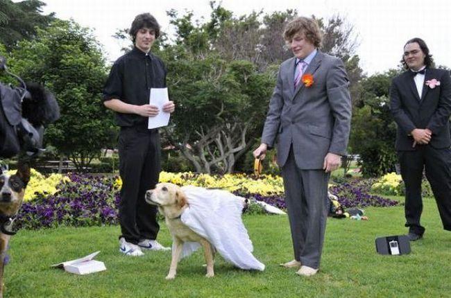 Australian oženio svog psa