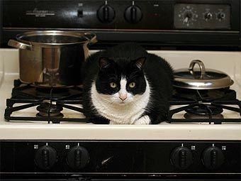 Austrijska mačka je počeo požar u stanu