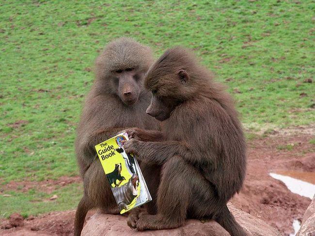 Novi mama brine o njegovom odjelu, ali stalno krao hranu (foto: sky.com)