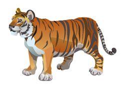 Bali Tiger fotografija