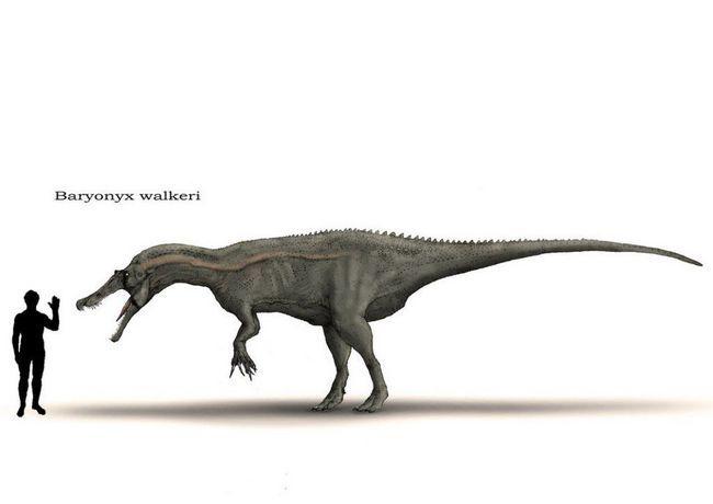Komparativna veličine Baryonyx.