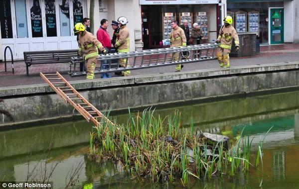 Три пожарные команды спасали белку, попавшую в водоем