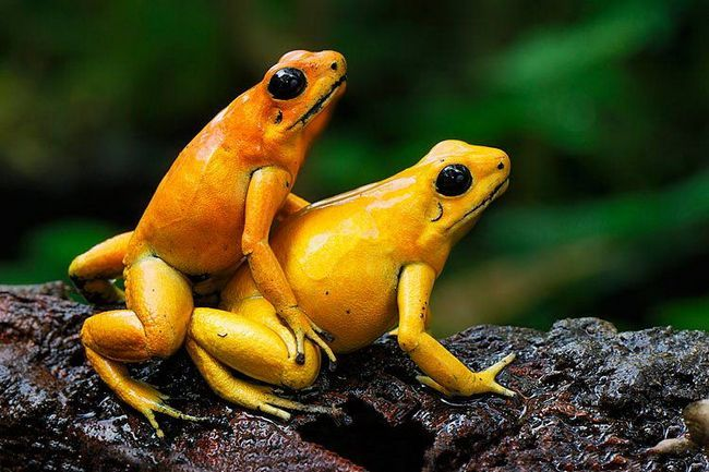 Bezrepi vodozemci, oni se odlikuju nedostaje vage, bogate gvožđem kože.
