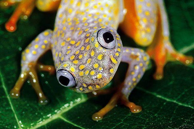Бесхвостые амфибии, для них характерна лишенная чешуи, богатая железами кожа.