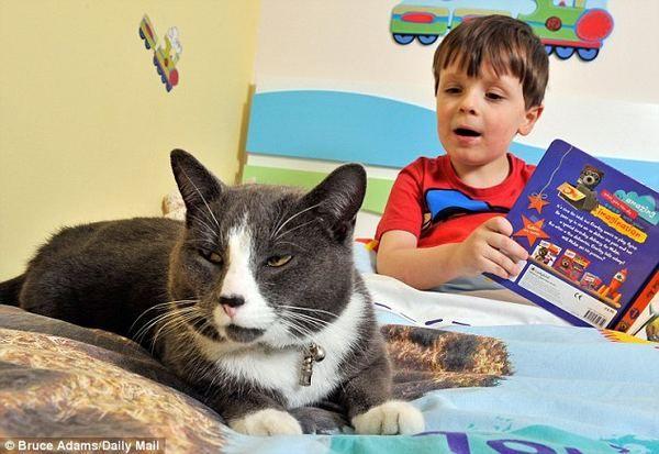 Homeless mačka pomogao autistični dječak postati društveniji