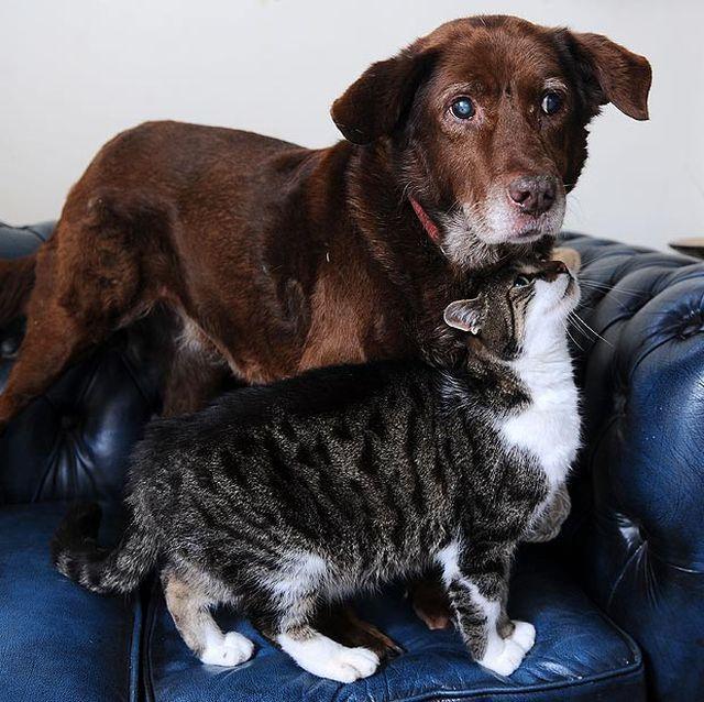 Mačka pobrinuo slijepih pseto, čim je prvi put vidio (foto: walesonline.co.uk)