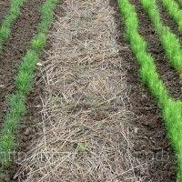 Biološka poljoprivreda