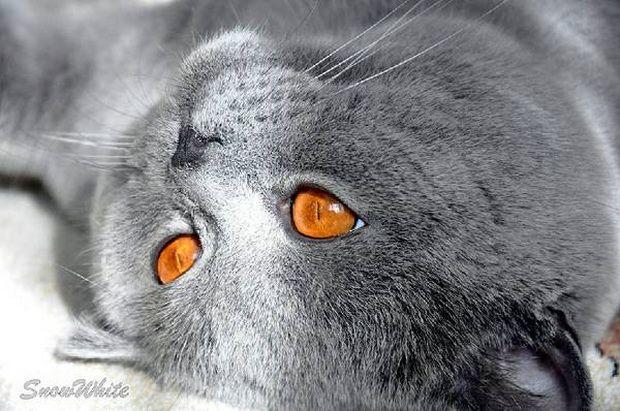 Блохи у кошек: диагностика и избавление