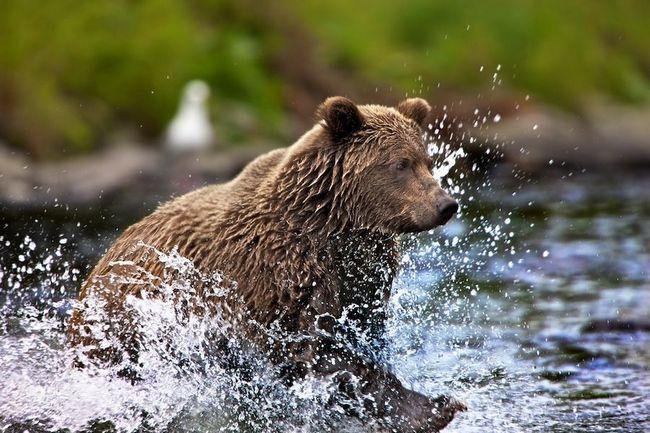 Rame uz rame s polarni medvjedi