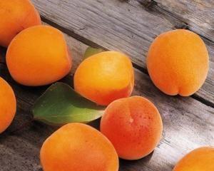 Болезни абрикос, методы борьбы и профилактки
