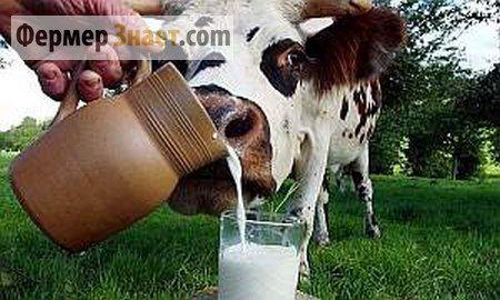 nový mlieko