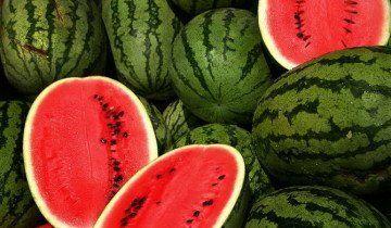 Выращивание арбузов, livelovefruit.com