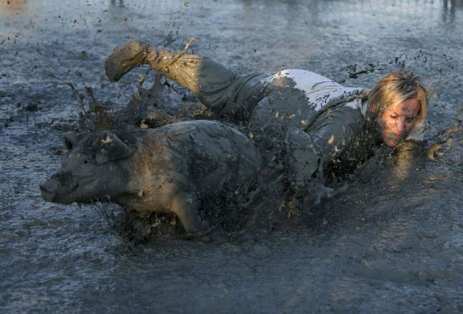 Borba u blatu sa svinjama