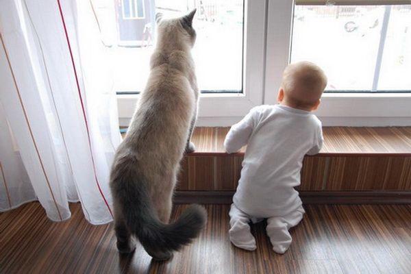 Британские кошки и новорожденные дети