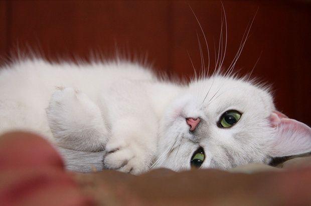 Еще раз об игнорировании туалета кошками