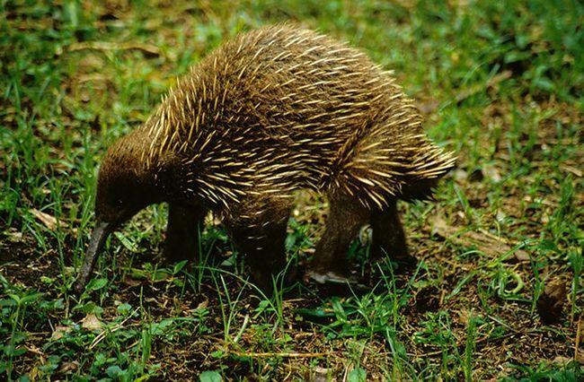 Британские ученые составили список из 100 животных, находящихся на грани вымирания