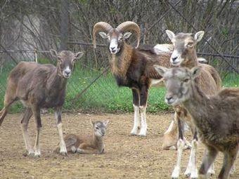 Pasa lutalica ugrizao 15 stanovnika u Sofiji Zoo
