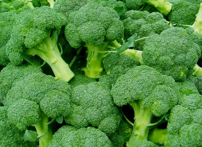 Ako rastie Brokolica