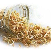 Целебные свойства ростков пшеницы