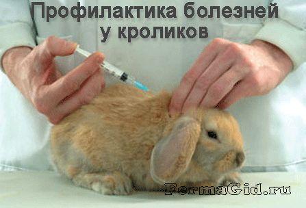 Часто встречающиеся болезни у кроликов: симптомы, лечение, профилактика