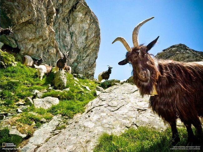 Упавший с горы козел столкнул туриста с 15-метровой высоты