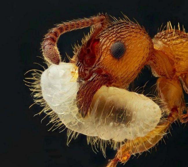 Mravi - svejed insekata.