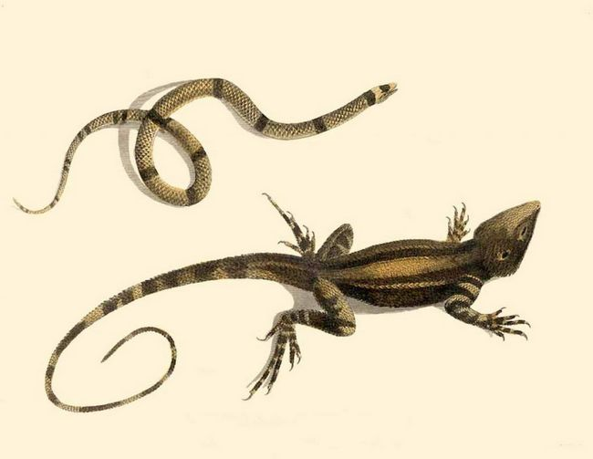 Na prvi pogled čini se da je osim nekoliko razlika između zmija i guštera nije velika razlika, ali to nije.
