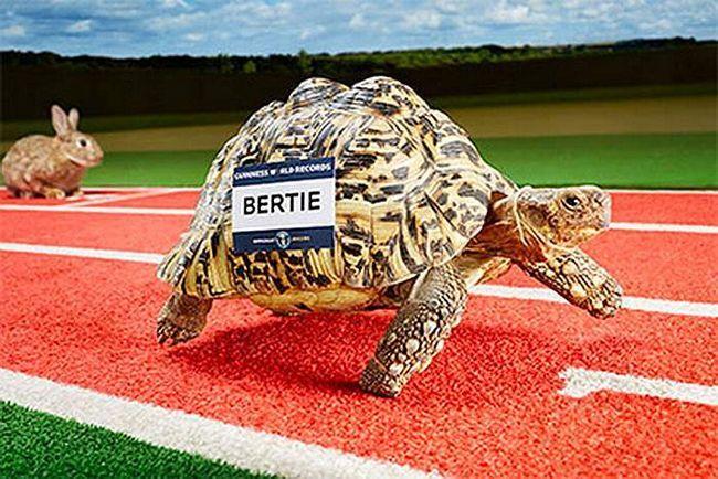 Bertie - novi rekorder u Ginisovu knjigu.