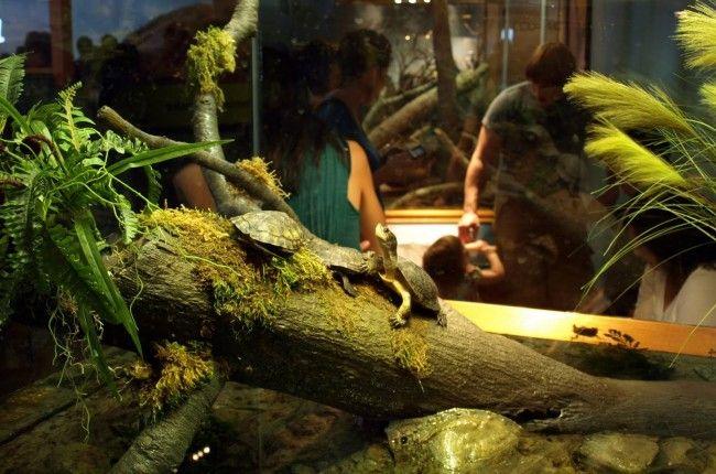 Vodene kornjače.