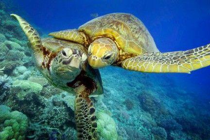 morske kornjače fotografija